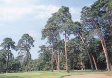 大宮ゴルフコース画像2