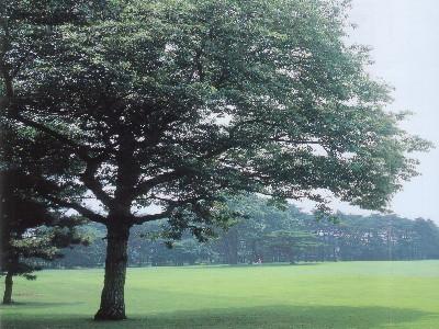 大宮ゴルフコース画像3