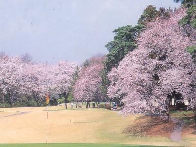大宮ゴルフコース画像4