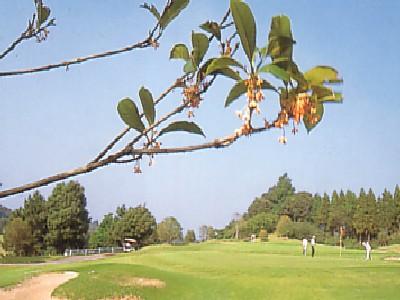 千葉セントラルゴルフクラブ画像5