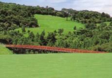 天城高原ゴルフコース画像2