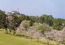 川奈ホテルゴルフコース 大島コース画像4