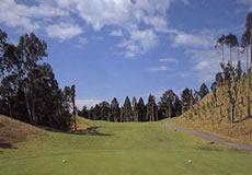パインフラットゴルフクラブ画像2