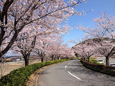 桜ゴルフ倶楽部1