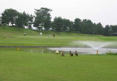 ゴルフ5カントリー かさまフォレスト(旧:かさまフォレストゴルフクラブ)画像2